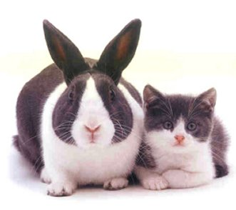 Identical Rabbit And Kitten