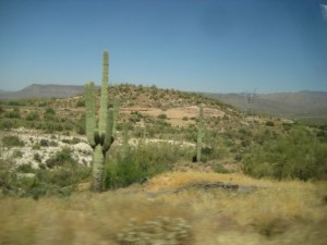 A Saguaro cactus, seen on the drive to the field site.
