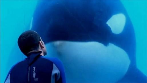 Blackfish Movie Shot