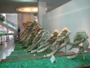 Some extinct elephants in a Chinese museum