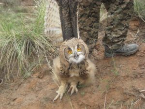 The owl that Henry stumbled upon as we hiked up toward our first fossil site