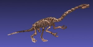 The 3D model of Falcarius that we generated using photogrammetry