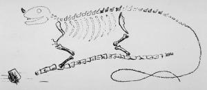 Gideon Mantell's original sketch of Iguanodon