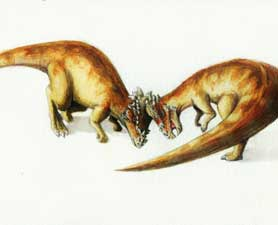 Pachycephalosaurs head butting, likely in a fight over a mate