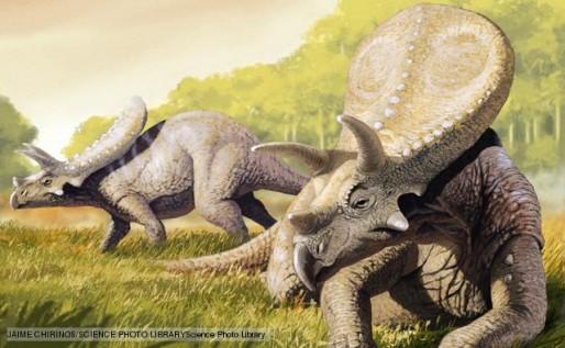 Torosaurus dinosaur, artwork