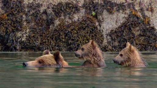 Bears Movie Shot