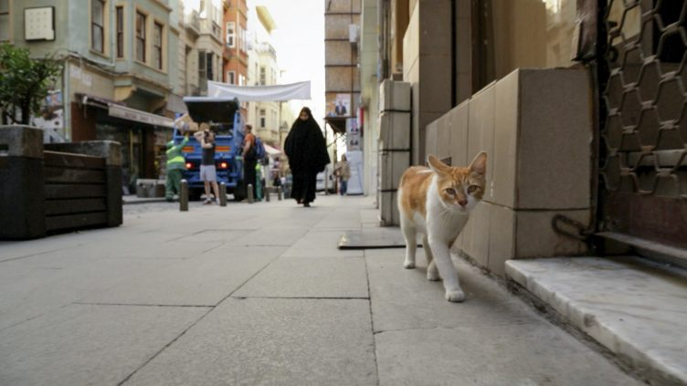 Kedi Movie Shot